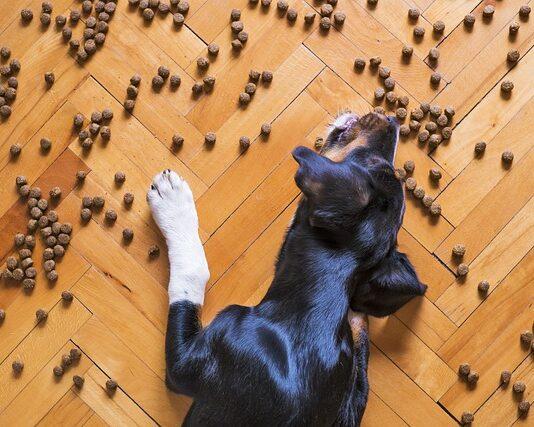 Czym się kierować, wybierając karmę dla psa